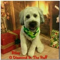 A Diamond In The Ruff