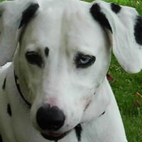 Save the Dalmatians and Others Canine Rescue, Inc.