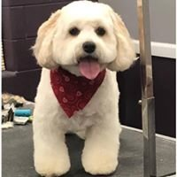 Shampooch Shop Dog & Cat Grooming LLC