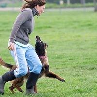 The Dog Athlete