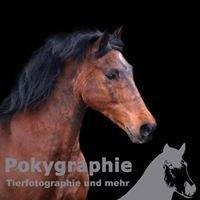 Pokygraphie - Tierfotographie und mehr