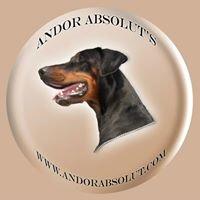 Dobermann kennel Andor Absolut's