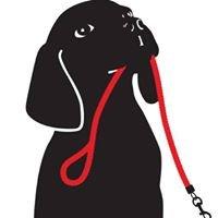 Brookside Pet Training Studio for Dogs