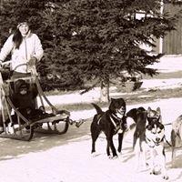 Trail Blazer Sled Dog Racing and Touring