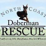 North Coast Doberman Rescue
