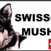 SWISSCOOL MUSHING