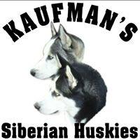 Kaufman's  Siberian Huskies
