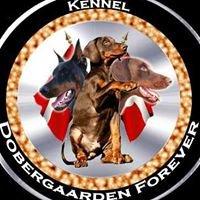 Dobergaarden Forever Kennel