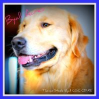 Byall Acres Golden Retrievers