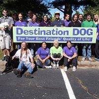 Destination Dog