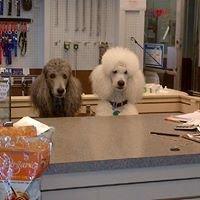 Bevans Pet Center