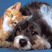 Holistic Veterinary Healing