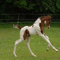 Linn Arabians & Pintos