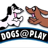 Dogs @ Play