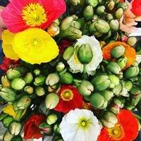 Holland Flower Market