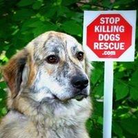 Stop Killing Dogs Rescue