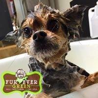 FurEver Green Dog Spa & Inspired Living Studio