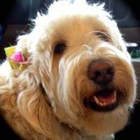 The FurMaid Award winning Canine design