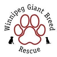 Winnipeg Giant Breed Rescue