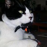 Jude's Herbal Pet Salon