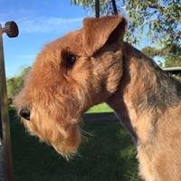 K9 STYLE Dog Grooming & Groomer Training