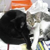Stateline Animal Clinic