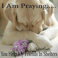 WAR Inc. (Wynona Animal Rescue Inc.)<wynonaanimalrescueinc@gmail.com>