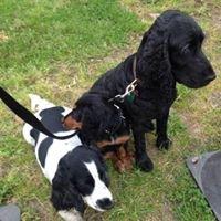 Ginnys groomers Doggie Spa