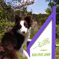 Run Spot Jump Dog Training