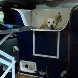 The Dog Basket Mobile Grooming