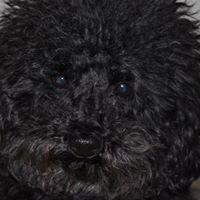 Kristen's Pet Grooming & Doggie Daycare