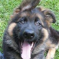Greater Coastal Canine Academy, Dog Training and Dog Store
