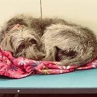 Canine Kids Pet Care, LLC