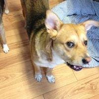 Yukon Animal Rescue Network - YARN