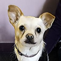 Central Bark Doggy Day Care Grayslake