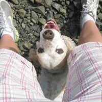 Helping Paws Professional Dog Training & Services