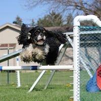 No Limits Dog Sports