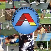 Canine Capers Agility Club