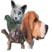 Avalon Animal Hospital & Bird Clinic