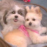 Urban Dog Sitters