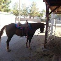 Sunset Saddlery & Feed