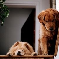 Natural Pet Distributors