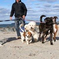 Liam Murphys Canine Fitness