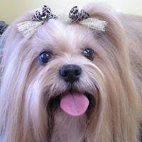 Barx Pet Grooming Spa
