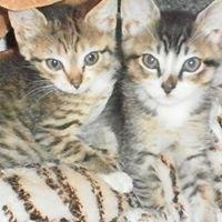 Coquitlam Animal Shelter