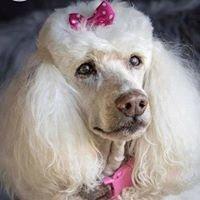 Dixie's Dog Spa