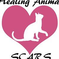 Healing Animal Scars - Sonya's Cat & Animal Rescue Society