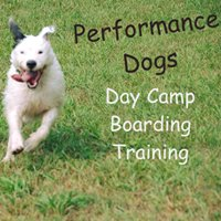 Performance Dogs