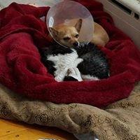 Kindness Animal Hospital, Waltham Ma