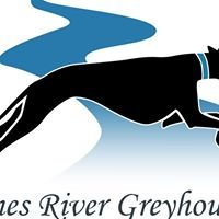 James River Greyhounds